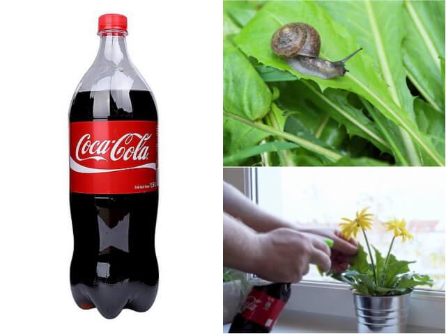 coca diet con trung